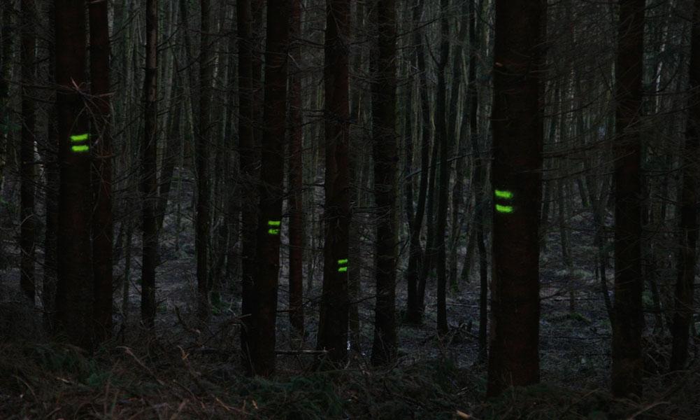 Eng stehende schwarze Bäume mit gelber Markierung in einem dunklen Wald