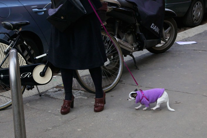 Chihuahua in purple sweater is running on a line next to a lady in black clothes and brown shoes