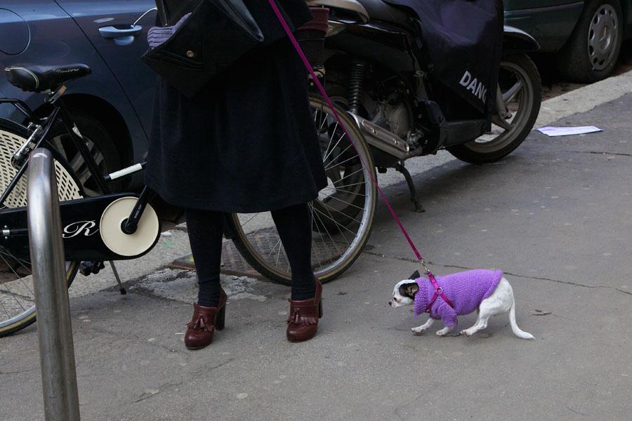 Chihuahua in lila Pullover läuft an einer Leine neben einer Dame in schwarzer Bekleidung und braunen Schuhen